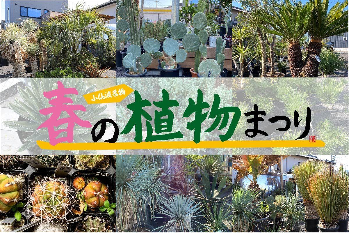 【小仙波名物?】春の植物まつり開催!